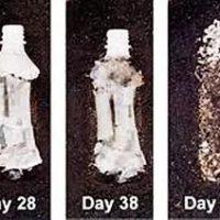 Bioplastique qu'est-ce que c'est Quels sont ses avantages et ses inconvénients